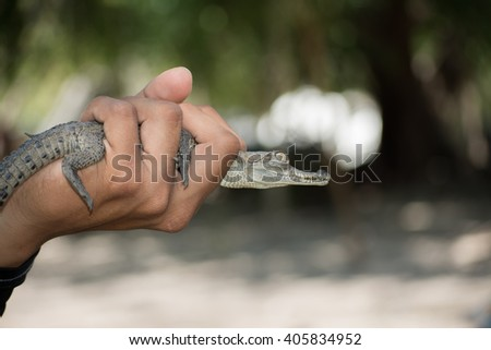 Young is in his hand small crocodile - stock photo