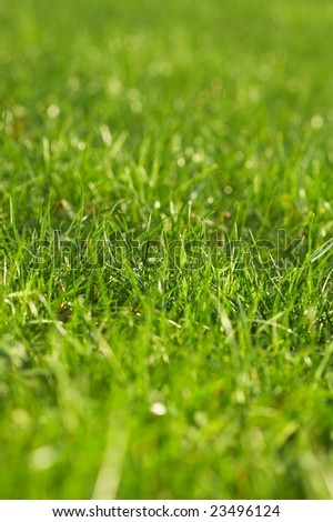 Young juicy green grass