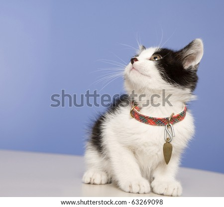 Young kitten in a foster program until he's old enough for adoption.  About 5-6 weeks old here. - stock photo