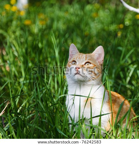 Young kitten in grass outdoor shot at sunny day - stock photo