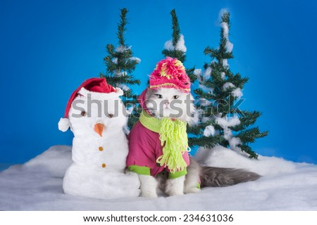 young kitten makes a snowman in a forest - stock photo