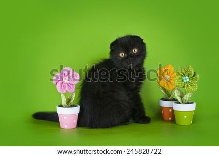 young kitten on a colored background isolated - stock photo