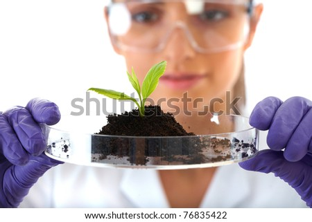 young lab assistant holds small flat dish with soil and plant, wears violet gloves, isolated on white - stock photo