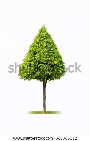 young landscape tree isolated on white background - stock photo