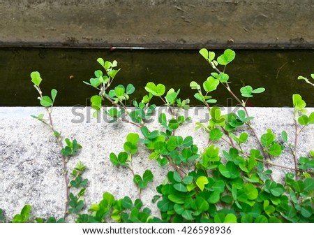 young leaves on ground - stock photo