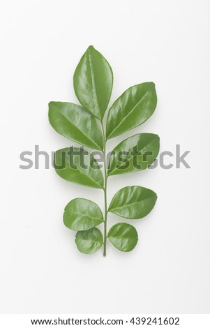 Young leaves on the branch isolated on a white background - stock photo