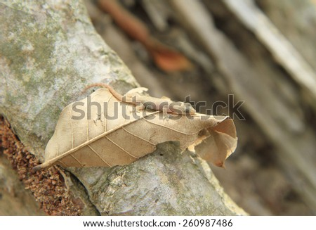 Young lizard on dried leaf - stock photo