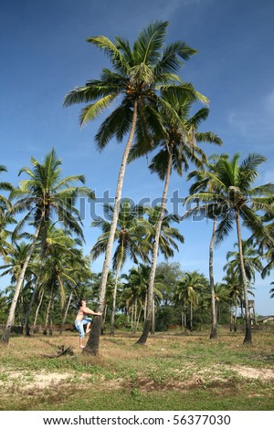 young man climbing on the coconut tree - stock photo