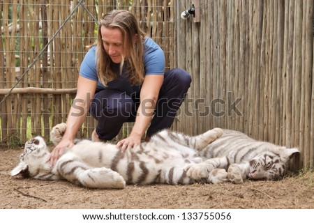 Young man plays with tiger cub. Shot in the Cango Wildlife Ranch, near Oudtshoorn, South Africa.