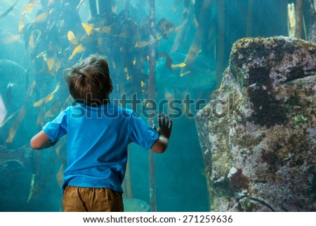 Young man touching a tank with algae behind the camera at the aquarium - stock photo