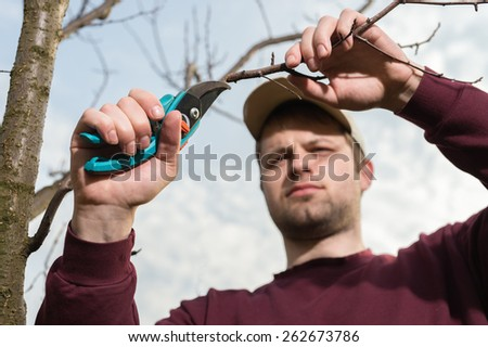 young man trimming trees with secateurs - stock photo