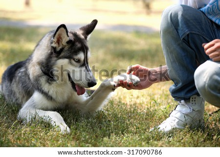 Young man with beautiful huskies dog in park - stock photo