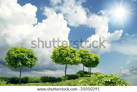 young  maples on blue sky