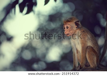 Young monkey curiously looks at passing tourists - stock photo