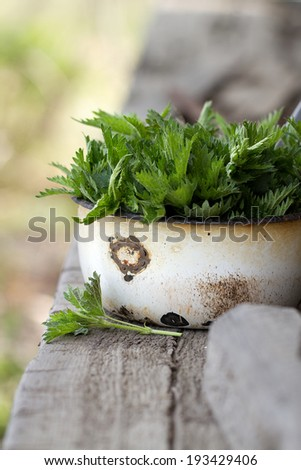 Young nettle leaves - - stock photo
