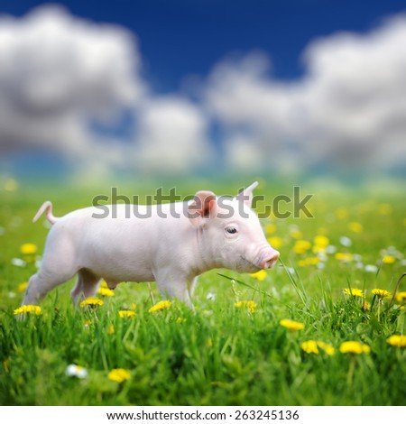 Young pig on a spring green grass in meadow - stock photo