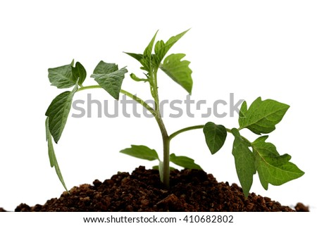 Young plant against white background