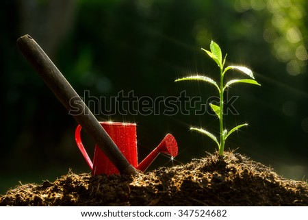 Young plant and garden equipment covered with sparking drops of water - stock photo