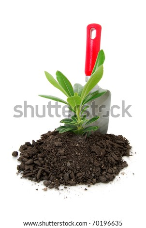 young plant and soil on white background - stock photo