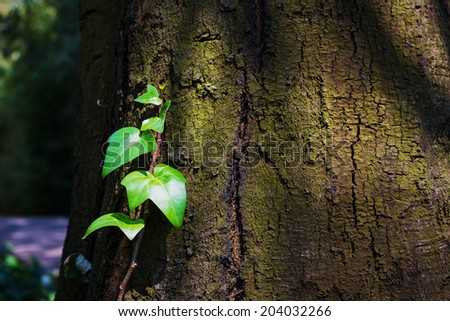 Young plant are growing. Located in Yunnan Nationalities Village, Kunming City, Yunnan Province, China. - stock photo