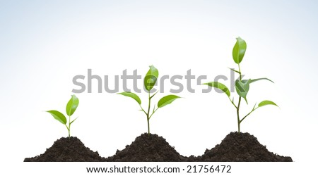 Young plant evolution on light background - stock photo