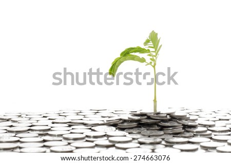 Young plant growing on coins