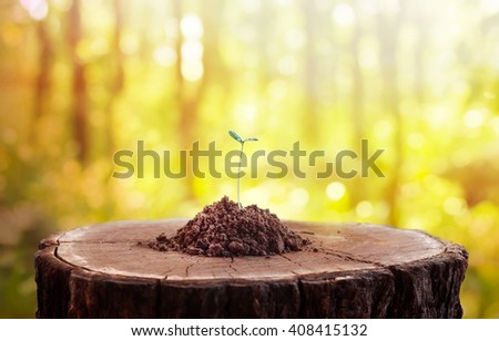 Young plant growing on tree stump, The generating hope concept. - stock photo