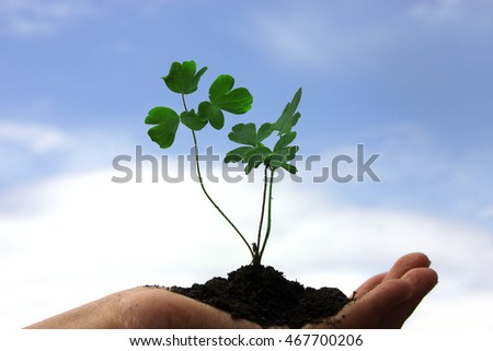 young plant in a person's hand, new life