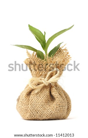 Young plant in bag - stock photo