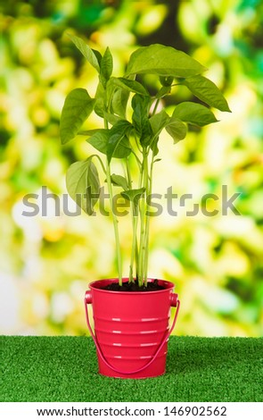 Young plant in bucket on grass on bright background