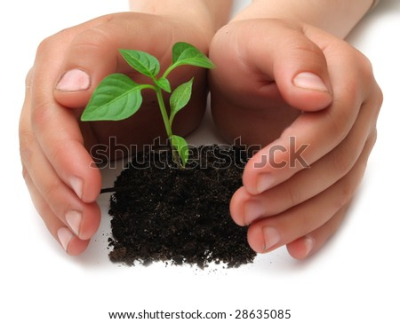 young  plant in childrens hands on white background - stock photo