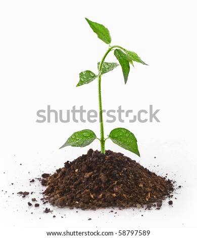 Young plant in ground over white - stock photo