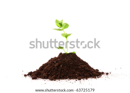 Young plant in ground over white background - stock photo