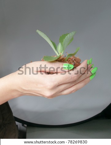 young plant in hand - stock photo