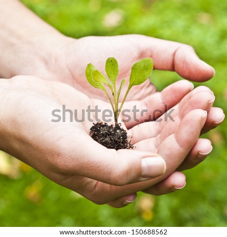Young plant in hand against green nature background Shallow depth of field