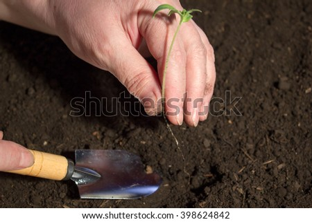 Young plant in hand on the background of the soil