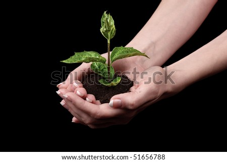 Young plant in hand over black background
