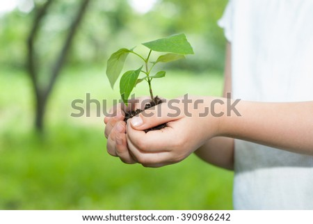 Young plant in hands against spring green background. Ecology concept - stock photo