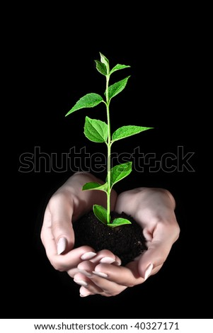 Young plant in hands on black background