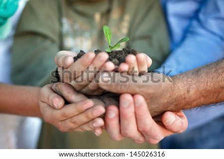 Young plant in hands, top view - stock photo