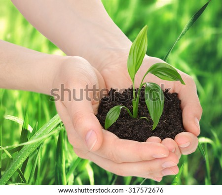 Young plant in hands with soil on green grass background - stock photo