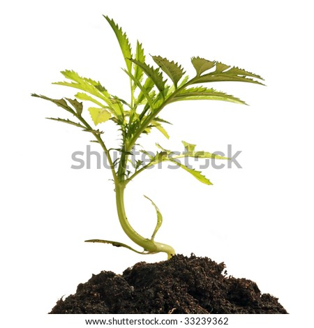 Young plant in human hands, isolated on a white background - stock photo