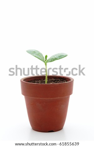 Young plant in small flowerpot
