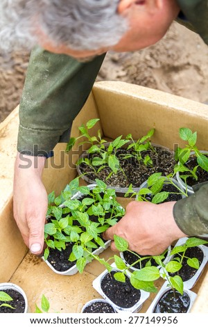Young plant in the hands of a farmer. close-up