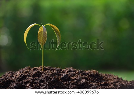 Young plant in the morning light on nature background - stock photo