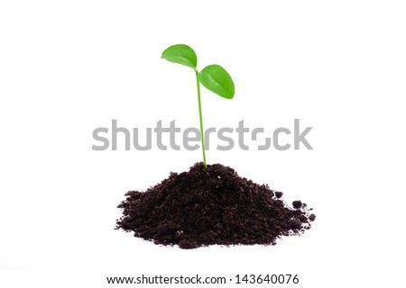 Young plant isolated on white background - stock photo