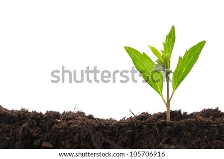 young plant isolated on white showing growth ecology or hope concept - stock photo