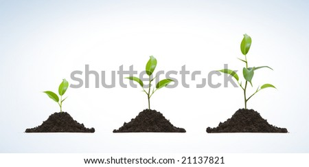 Young plant on light background - stock photo