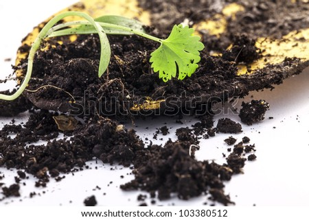 Young plants and garden tools - stock photo