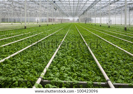 Young plants growing in a very large plant nursery in the Netherlands. - stock photo
